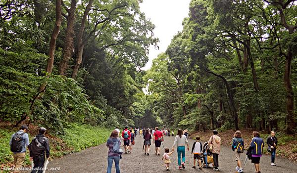 Meiji forest